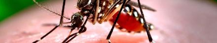 banner_Capacitao--Dengue-Chikungunya-e-Zika